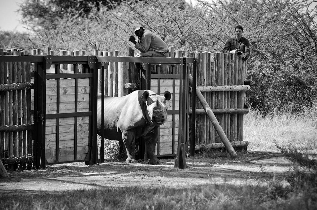 Bots - Black Rhino Release_Nic Proust Jul2014_HighRes
