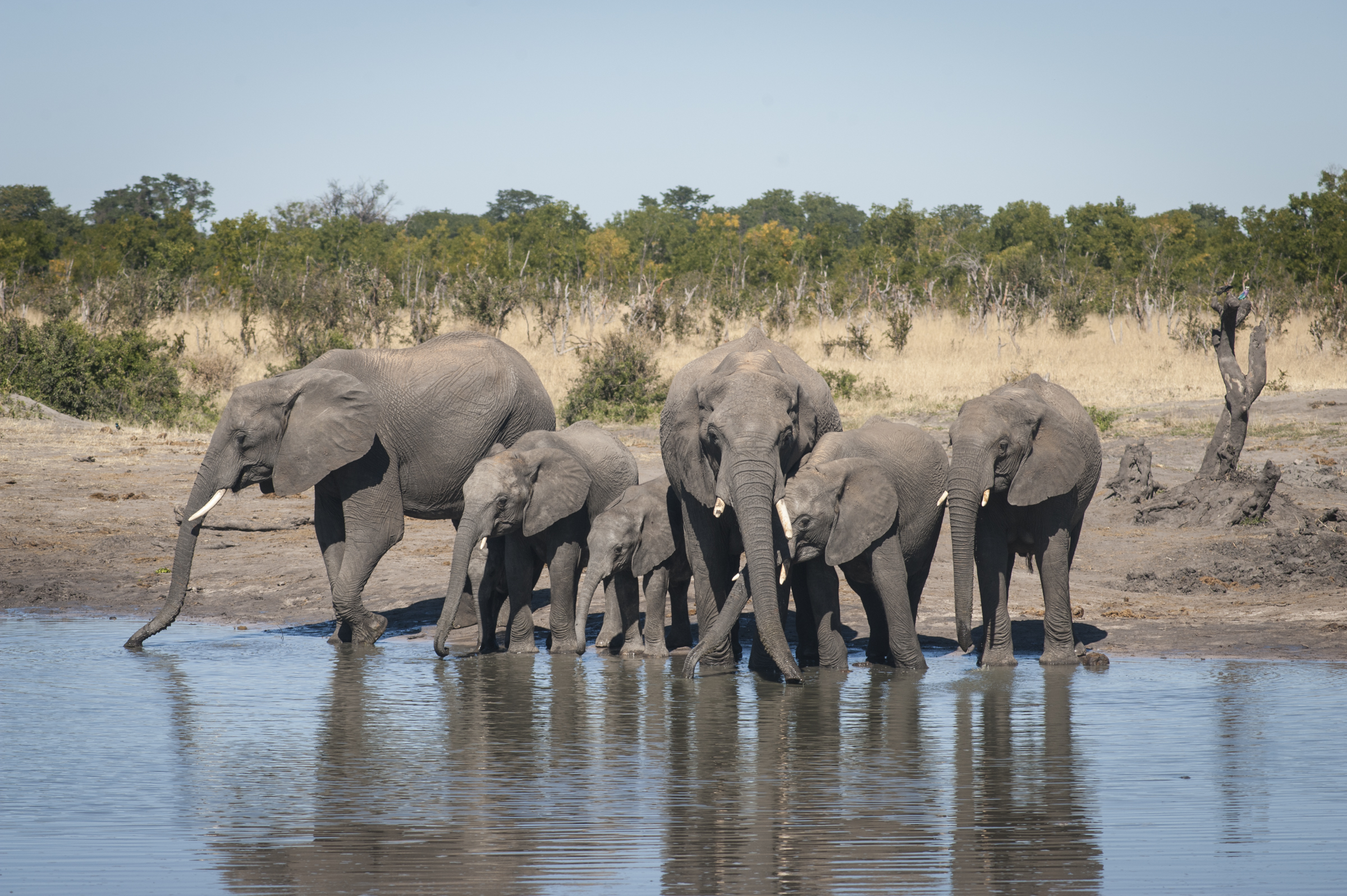 A typical scene at a waterhole, photo by Anton Crone