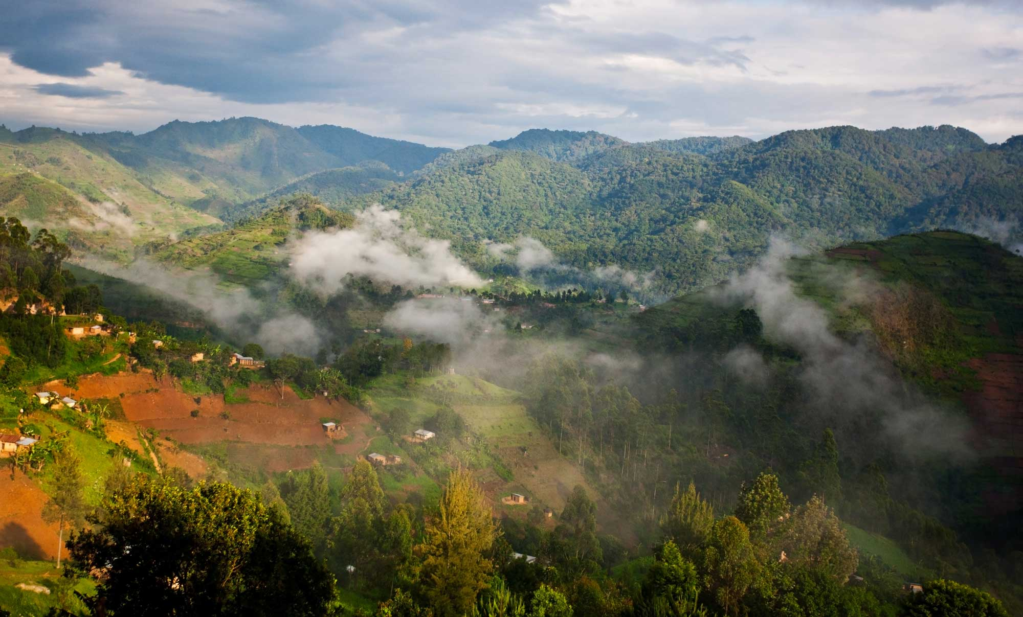 Bwindi Impenetrable National Park in Uganda