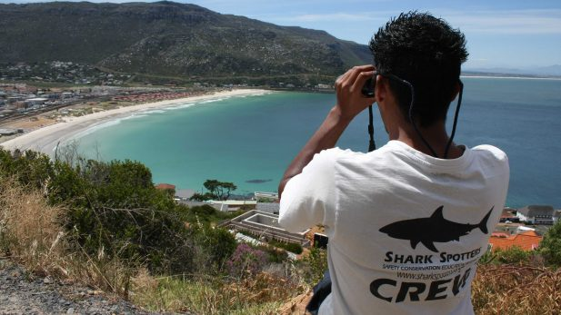 Shark spotters are strategically positioned at elevated points above popular swimming and surfing beaches. Using polarised sunglasses and binoculars they scan the water and act as an early warning system for potentially dangerous sharks coming close to shore. © Shark Spotters