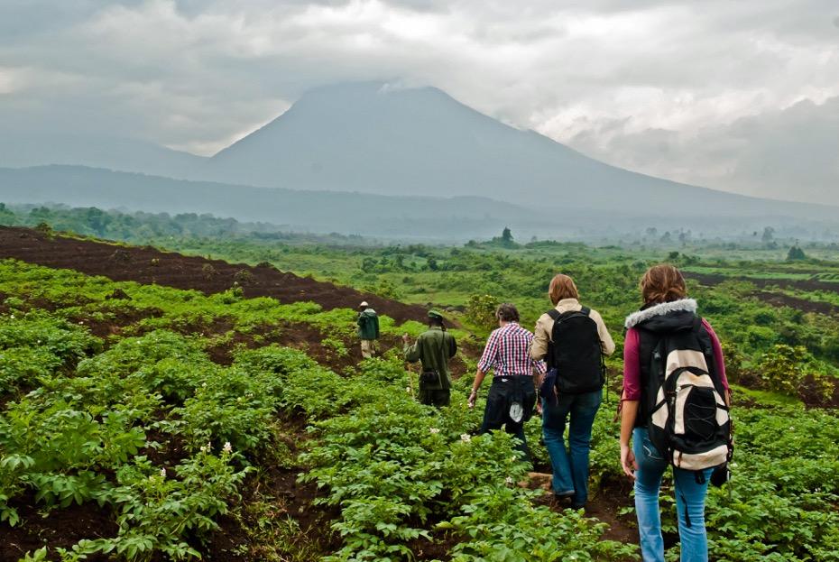 Gorilla tracking in Virunga
