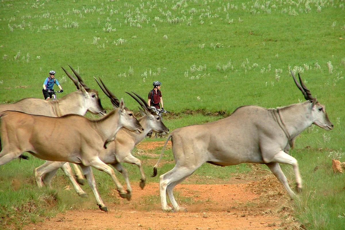 Sighting of eland