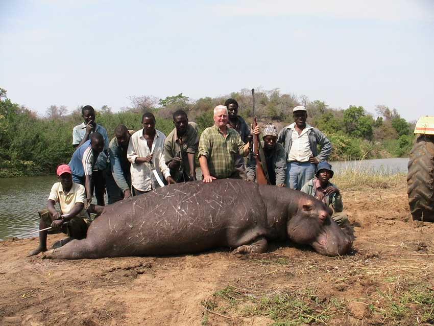 Hippo poaching – via http://bigfivehq.com/