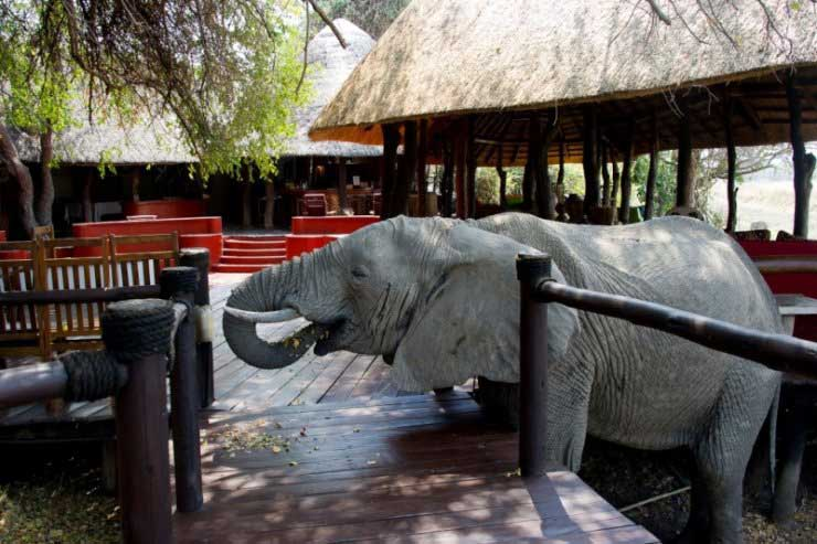 Elephant coming to stay at Lion Camp – courtesy of Lion Camp