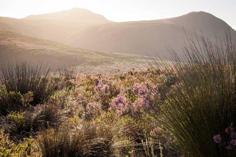 Grootbos Reserve landscape