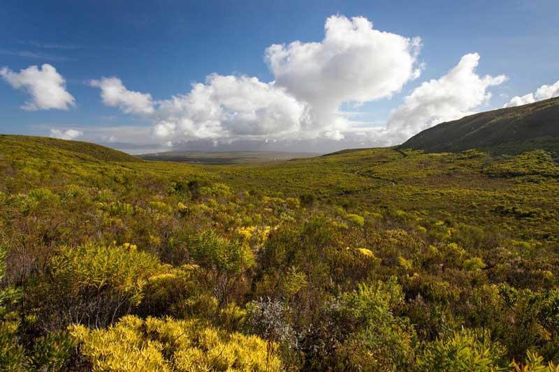 Fynbos at Grootbos