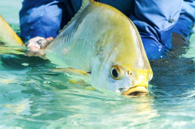 A catch on Alphonse Island, Mozambique –via Fly Odyssey