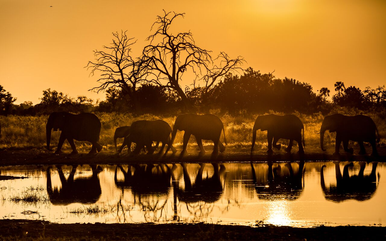 Elephants enjoying untouched landscape by Qorokwe