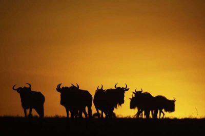 Photo taken at Great Plains' Mara Expedition Camp – photos are courtesy of Great Plains Conservation