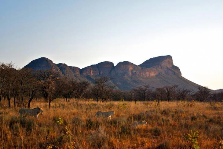 Waterberg Mountains