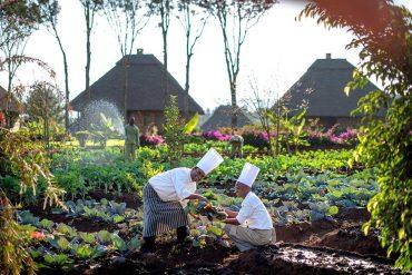 Vegetable garden at Neptune Ngorongoro