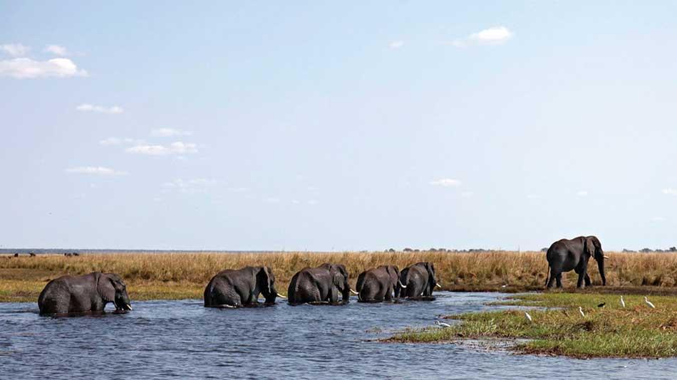 Wildlife at Chobe Lodge, andBeyond